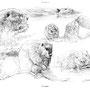 Le Castor - Image d'Epinal - 32,5 x 25 cm  <br><br>Dessin animalier . peintre animalier . artiste peintre . animal . dessin crayon . crayon noir . planche animalière . étude animalière