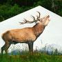 Cerf sur pignon chalet Ventron (88) - Acrylique sur panneau - 3 m x 2 m - 2007<br><br>fresque . trompe l'oeil . peinture animalière . peinture brâme cerf