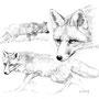 Le Renard - Image d'Epinal - 32,5 x 25 cm  <br><br>Dessin animalier . peintre animalier . artiste peintre . animal . dessin crayon . crayon noir . planche animalière . étude animalière