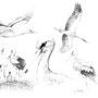 L'Oie - Image d'Epinal - 32,5 x 25 cm  <br><br>Dessin animalier . peintre animalier . artiste peintre . animal . dessin crayon . crayon noir . planche animalière . étude animalière