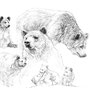 L'Ours - Image d'Epinal - 32,5 x 25 cm  <br><br>Dessin animalier . peintre animalier . artiste peintre . animal . dessin crayon . crayon noir . planche animalière . étude animalière