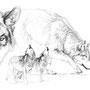 Le Loup - Image d'Epinal - 32,5 x 25 cm  <br><br>Dessin animalier . peintre animalier . artiste peintre . animal . dessin crayon . crayon noir . planche animalière . étude animalière