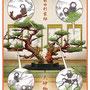 朝日中高生新聞 連載「テーマで歴史探検」華道3