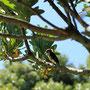 Botanischer Garten Kirstenbosch/ Botanical Garden of Kirstenbosch