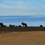 Buffelfontein
