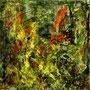 Garden 3   (80x80)   2003