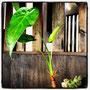 店内の観葉植物です。