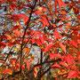Herbst Ende November