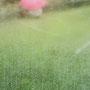 クローズアップ01:雨に咲く