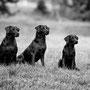 Generationenfoto: Ivy, Mama Grace und Halbschwester Sally