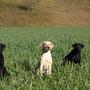 Bruder Ike, Cousine Kiwi und Ivy