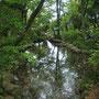 湧き水の池。ここに蛍もいるんでしゅうね、きっと