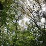 うっそうとしげる木々。森林浴にも最適です