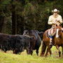 RossFoto Dana Krimmling, Pferdefotografie, Westernreiten, Viehtrieb, Dahn, Gerhard Kissel, Westernladen Dahn