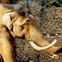 Elefantenbulle Maxi