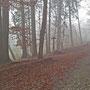 Einmal mehr Nebel