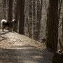 meine Pflichten als Wachhund darf ich auch bei einer Wanderung nicht vernachlässigen ...