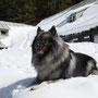 auf der Oberst-Klinke-Hütte (1504m) gab es zu meiner großen Freude 1,5 m Schnee!