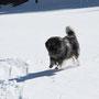 über den Schnee freute ich mich tierisch!