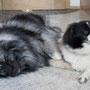 auch Wachhunde brauchen eine Ruhepause ;)