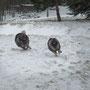 ich mach mit Hera eine Schneewanderung am Cobenzl! man muss die Feste ja feiern, wie sie fallen.