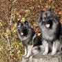 Hera und ich haben einen schönen Herbstspaziergang unternommen ...