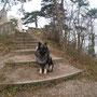 wer wagt es, die Burg Mödling zu betreten? an mir kommt niemand vorbei, ohne zuvor sorgfältig geprüft zu werden!