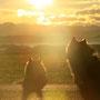 mit Ivy den Sonnenuntergang genießen