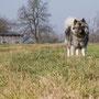 ich hab mich schon bei mehreren Hundeschulen informiert, keine bietet Mäusefang-Kurse an ...