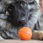 mag jemand Ball spielen?