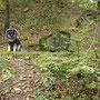 wie toll, im Wald hat der Herbst schon Einzug gehalten!