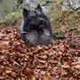 ... also nehm ich mir ein Blätterbad. wie ihr seht, bin auch schon eingewurzelt. Zu Hilfe! ;)