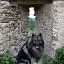 auf der Burgruine Dürnstein