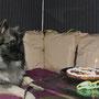 bei meinem erster Geburtstag fing das Riesen-Leckerli Feuer! die mundgerechten Häppchen sind mir nun um einiges lieber