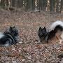 Hera und mein letzter Ausflug in den Wienerwald im alten Jahr ...