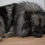 richtige Wachhunde haben ihren Schlafplatz vor der Eingangstüre!