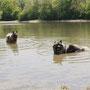 hey leute, ihr wollt euch gar nicht abkühlen? das Wasser ist wirklich schon warm genug!