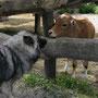 ... im Tierpark Haag ...