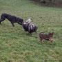 am Roten Berg gab es heute eine Hundeparty!