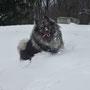durch den Schnee stapfen macht echt Spaß!