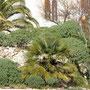 Leuca, Lungomare C. Colombo, Villa Daniele, giardino a Sud. Estate