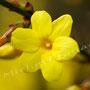 Blume Nr.0367
