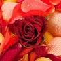 Rosenblüten-Blätter Nr.0085