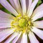 Blüten-Allgemein Nr.0575