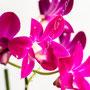 Orchidee Nr.0635