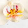 Orchidee Nr.0609