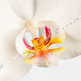 Orchidee Nr.0617