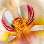Orchidee Nr.0607
