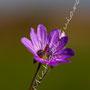 Blüten-Allgemein Nr.0574