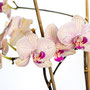 Orchidee Nr.0646